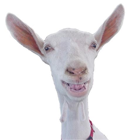 Because Goats