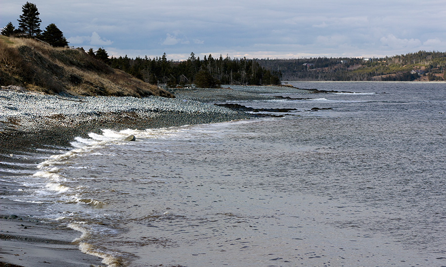Cow Bay Surf